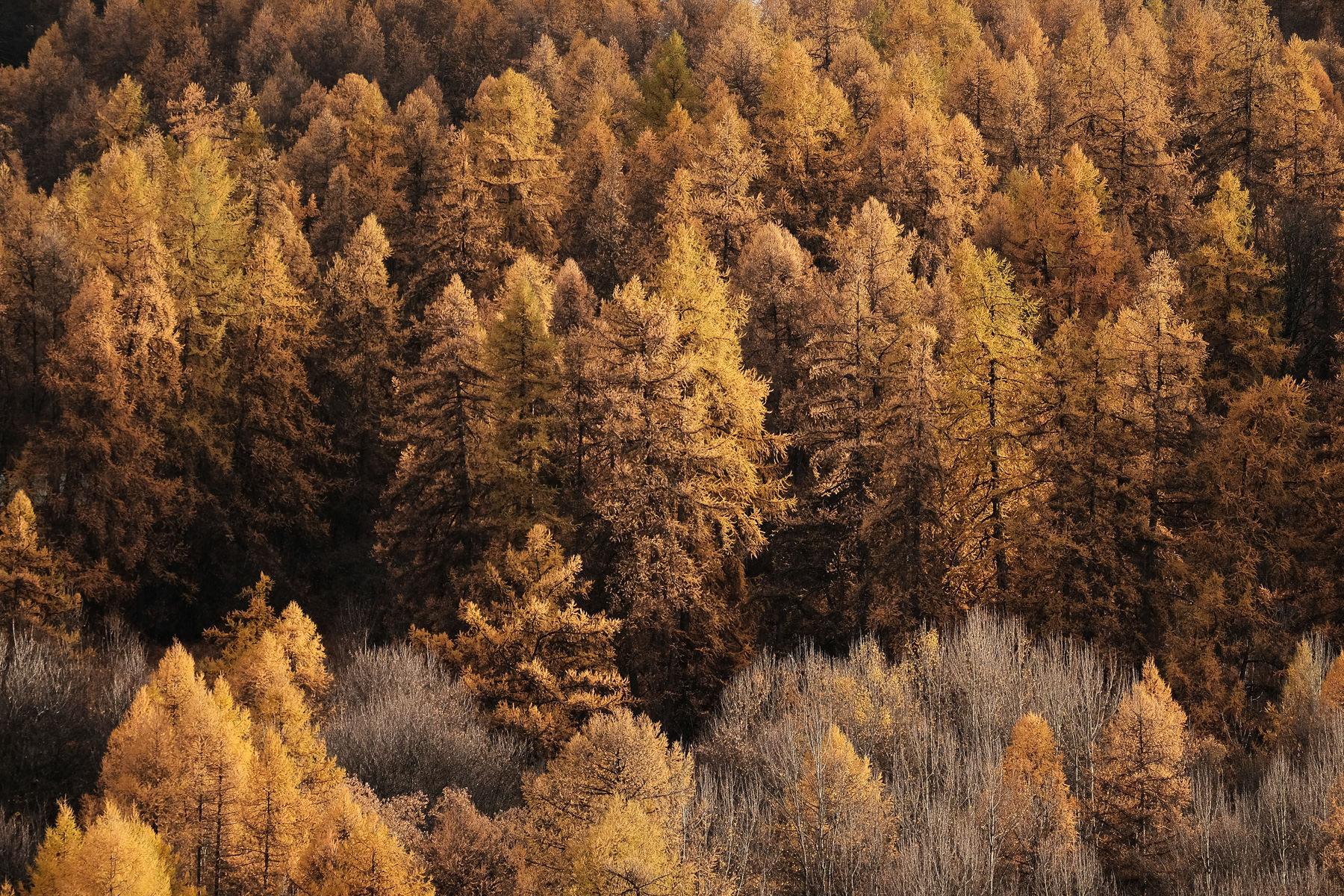 Mélèzes à l'automne à Valloire