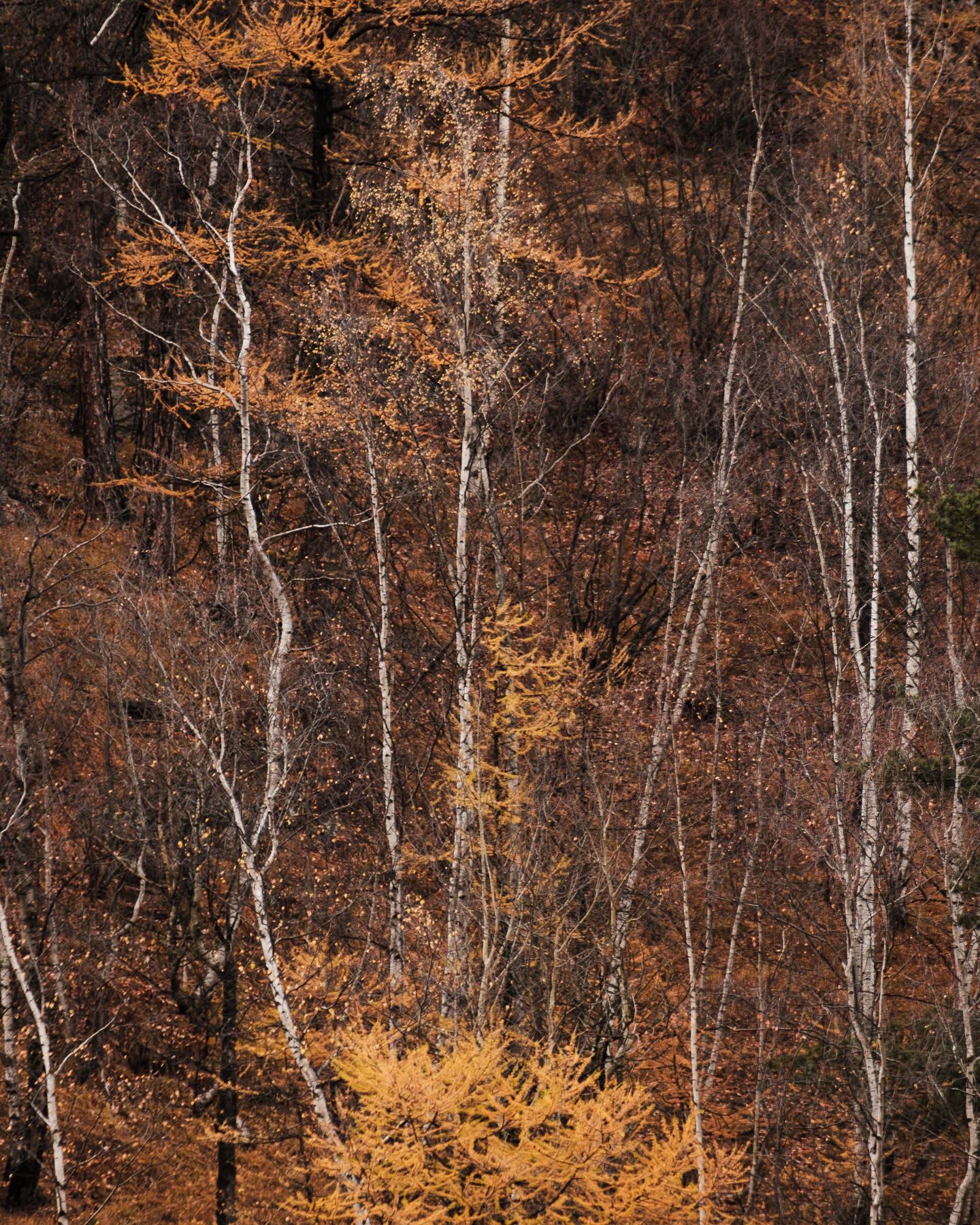Couleurs d'automne à Valloire lors d'une balade