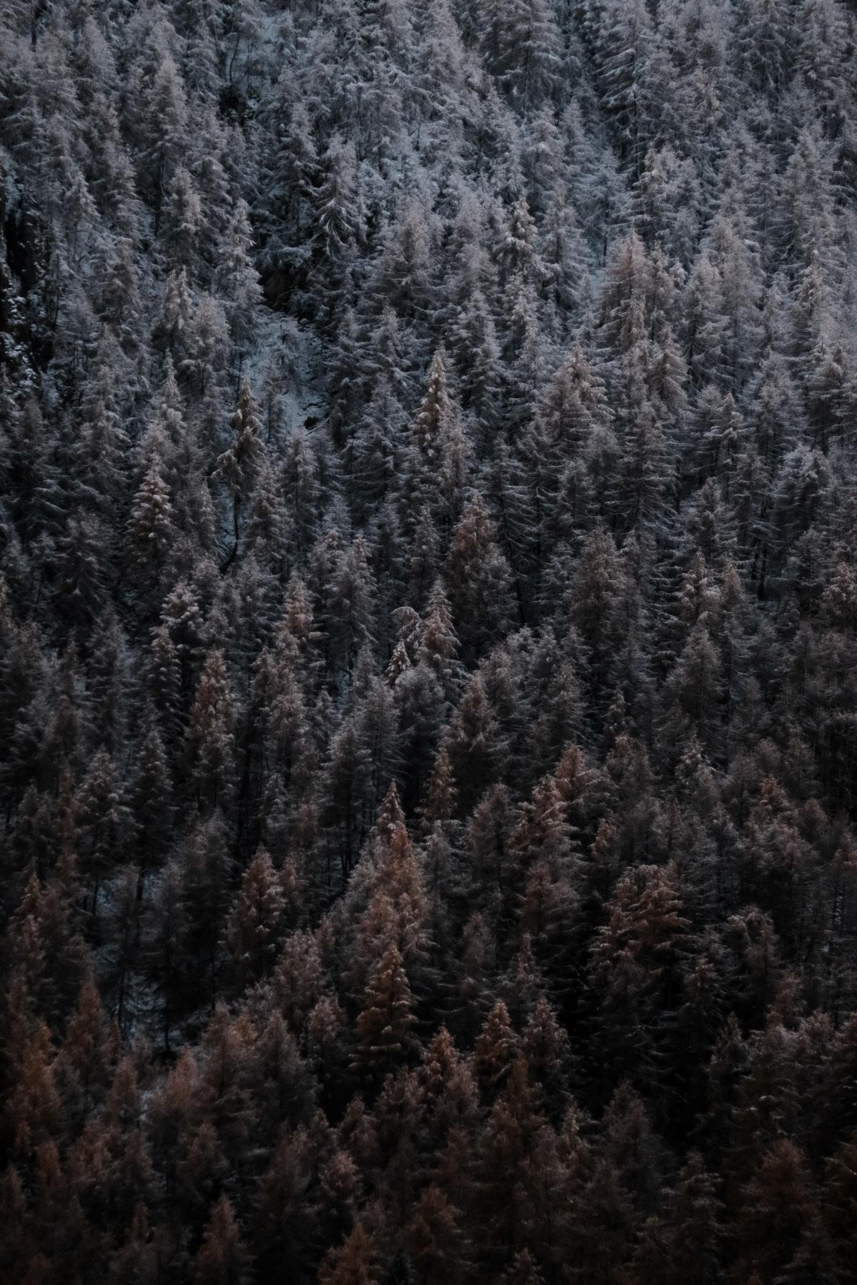 La neige qui recouvre la forêt en novembre à Valloire
