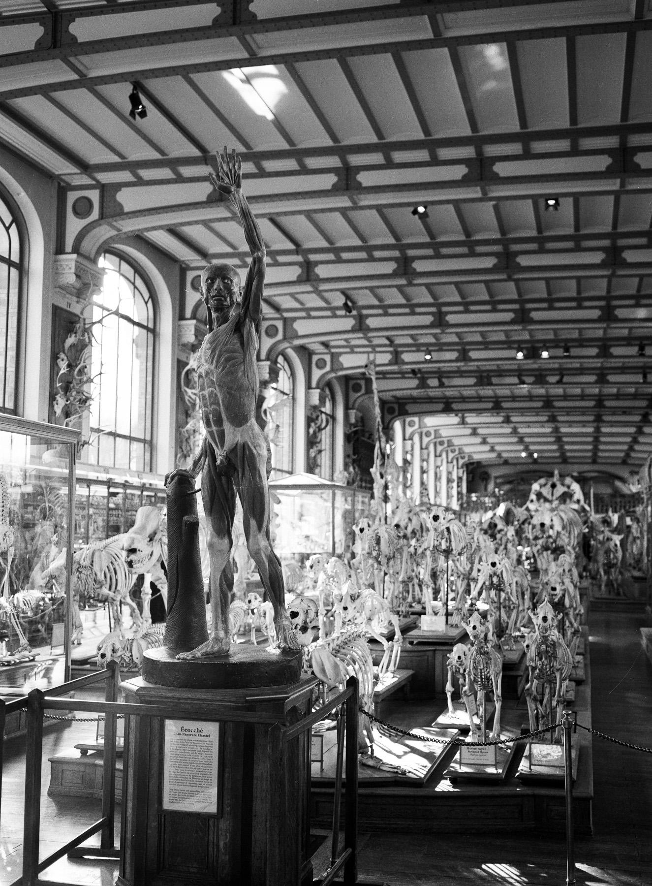 Galerie d'Anatomie Comparée, Ilford HP5 + GA 645