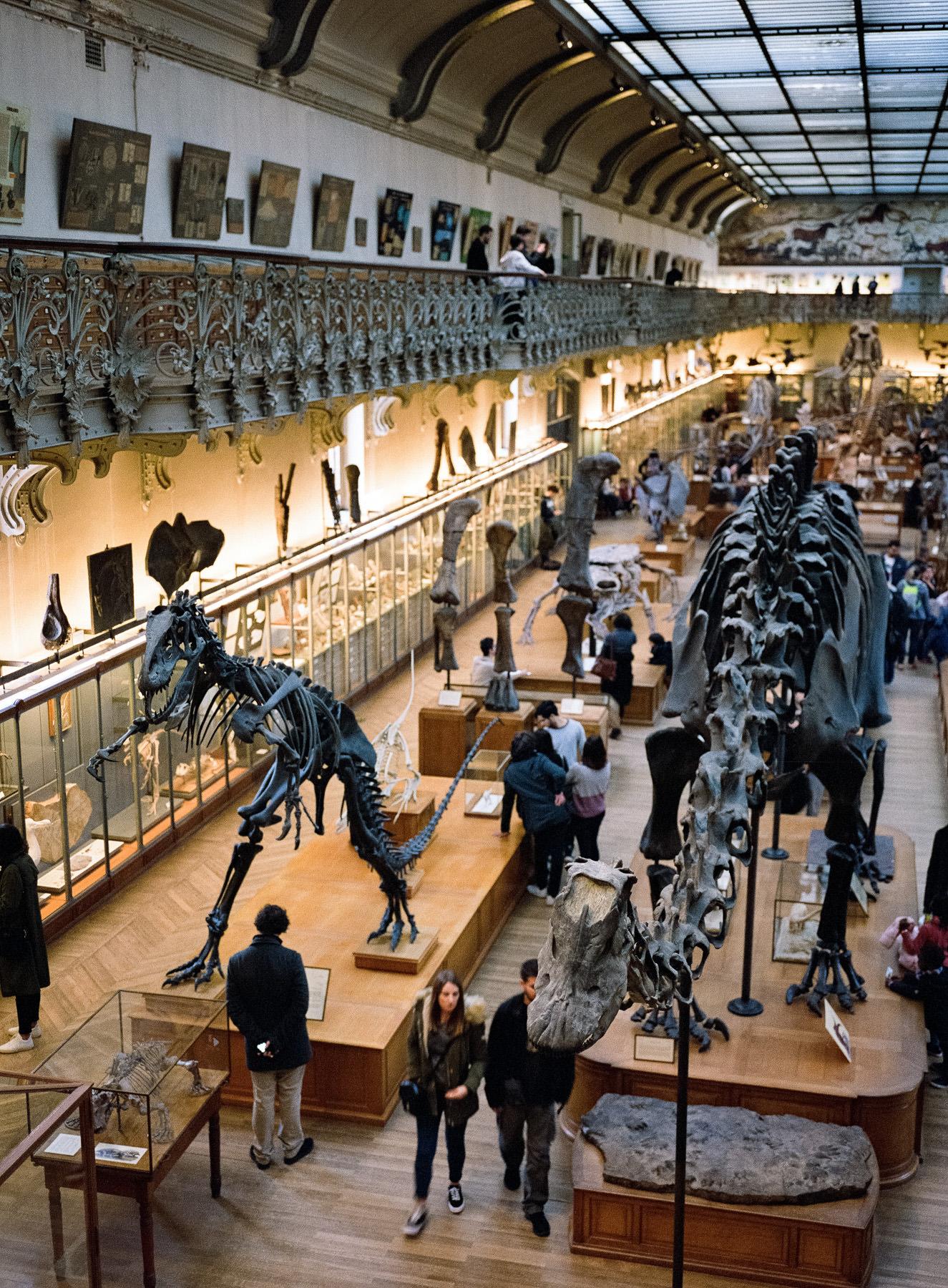 Galerie de paléontologie, Paris - moyen format argentique