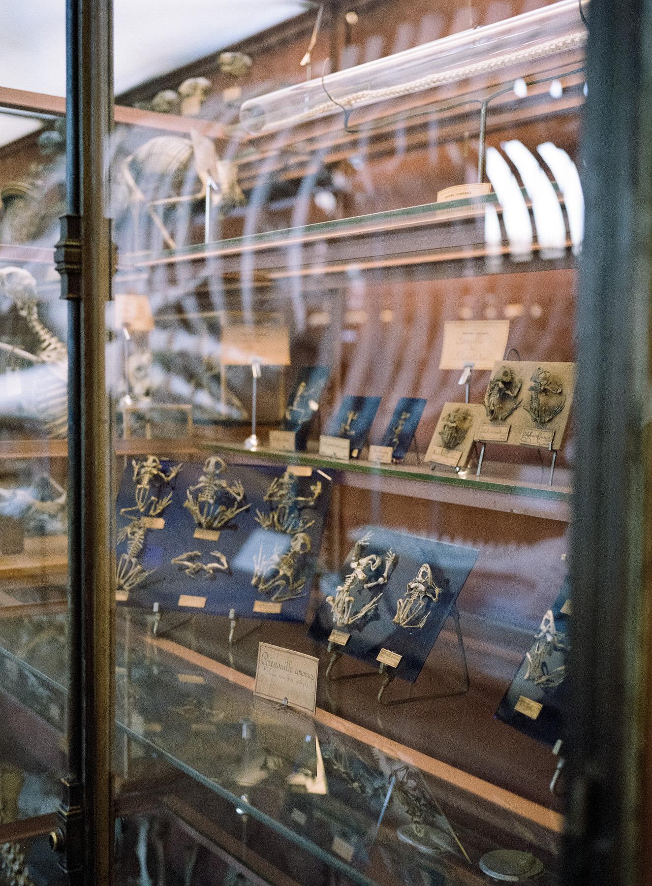 Galerie d'Anatomie Comparée, Paris, Fuji 400H + GA 645