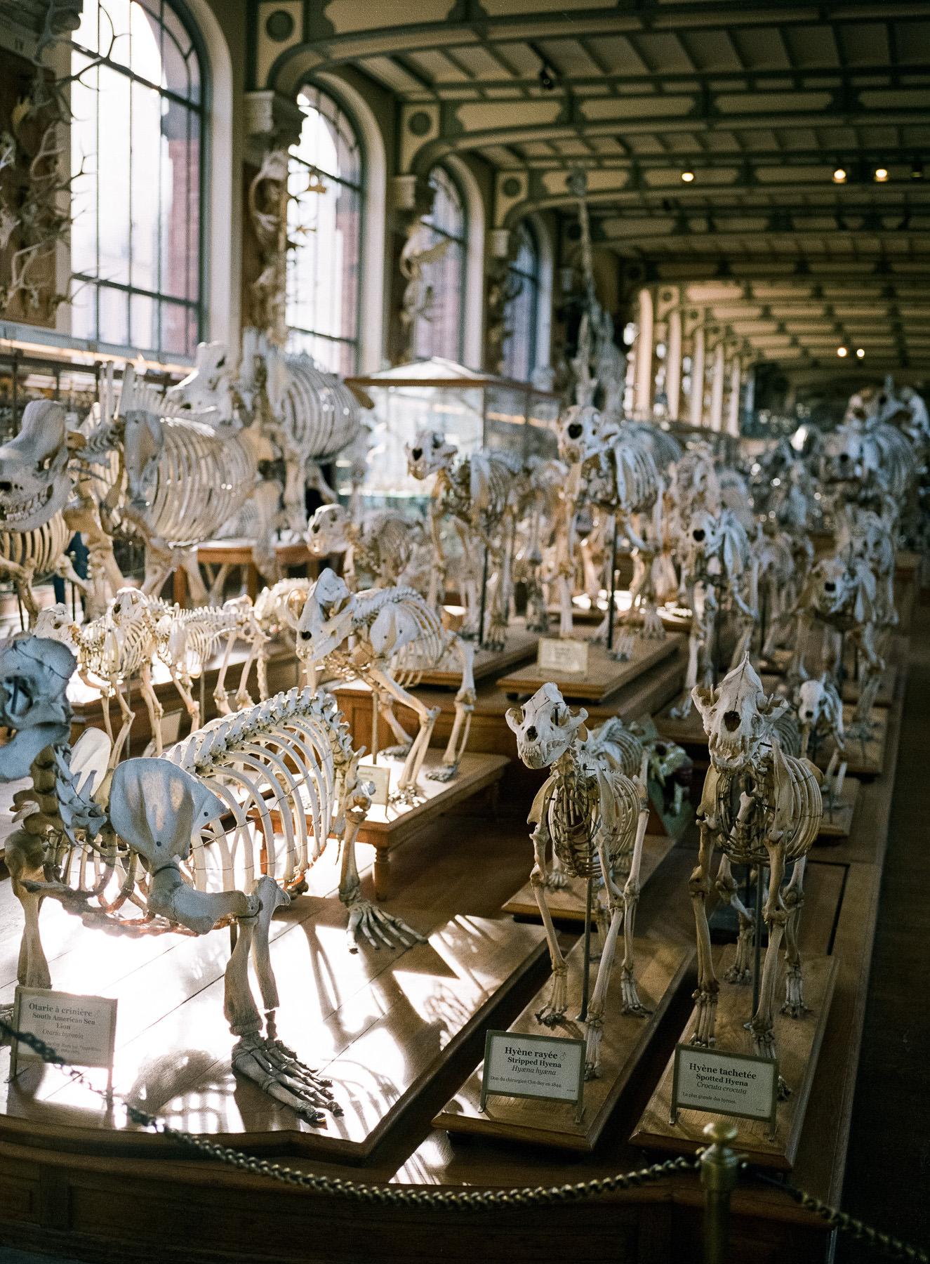 Muséum national d'histoire naturelle, Galerie d'Anatomie Comparée, Paris, Fuji 400H + GA 645